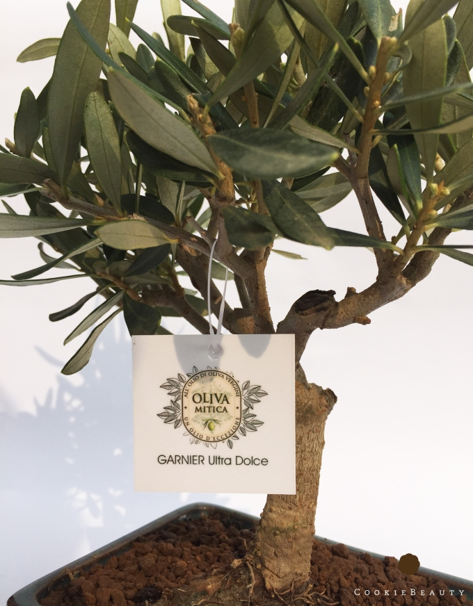 oliva-mitica